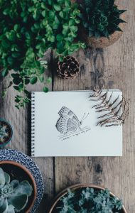 dessin-papillon
